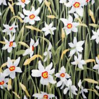 Daffodil Meadow :  : Multi : Michael Miller : 100% Cotton :
