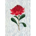 WARATAH - NSW STATE FLOWER : VINTAGE AUSTRALIAN FLORAL EMBLEMS APPLIQUE KIT : Multi : Batik Australia : 100% Cotton : KITS